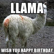 llama wish you happy birthday drama llama meme generator