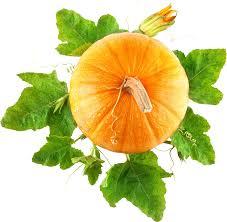 pumpkin no background png image