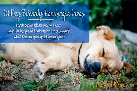 Backyard Landscaping Ideas For Dogs 10 Dog Friendly Landscape Ideas All County