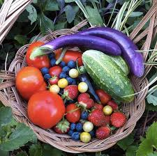 organic fruit of the month club want an organic garden here s why you need organic seeds
