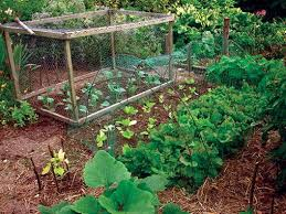 What Type Of Soil For Vegetable Garden - vegetable gardening a beginner u0027s guide nc state extension