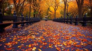 cute autumn wallpapers wallpaperpulse