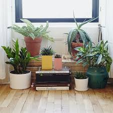 plant delivery 100 best window gardens images on houseplants plants