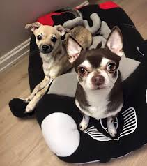 Puppy Beds Best Selling Mercedes Benz Dog Bed Race Car Dog Beds 2017