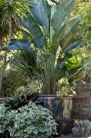 tropical garden ideas best 25 tropical backyard landscaping ideas on pinterest pool