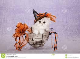 orange halloween ribbon background halloween witch hat stock photos image 33723153
