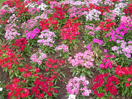images about flowers and gardens on pinterest flower beds bed