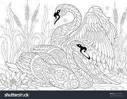 stylized couple two swans among lotus stock vector 514739314