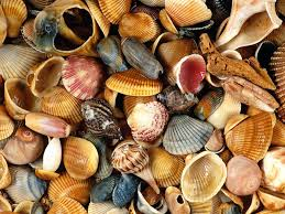 seashells wallpapers first hd wallpapers