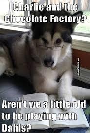 Funny Cute Animal Memes - funny dog cute meme bajiroo com