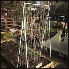 Trellis Seattle 66 Best Garden Trellises Images On Pinterest Garden Trellis Pea