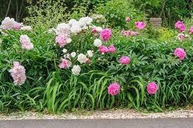 lovable flower garden planner flower garden design perennial