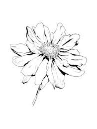 Flower Drawings Black And White - drawing blooming aster flower coloring pages bulk color