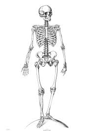 95 best anatomia images on pinterest coloring pages coloring