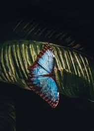 butterfly pictures download free images on unsplash