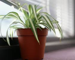 plant on desk the best office plants plants that will thrive on your desk