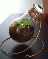 Entry9 by Light Bulb Light Bulb Planter Caught Our Eye About This Light
