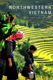 50 best terraced rice fields in sapa images on pinterest