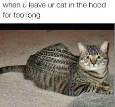Funny Hood Memes - hood meme funny pictures quotes memes funny images funny