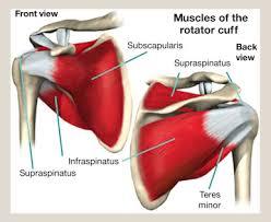 Innervation Of Infraspinatus Rotator Cuff Tears