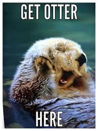 Otter Meme - th id oip lcki944s7lsfknznuaw ahaj4