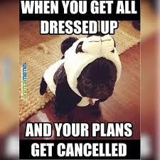 Sad Animal Memes - 29 best dog memes images on pinterest doggies cutest animals