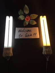 100 u shaped fluorescent bulbs t9 fluorescent bulbs