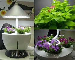 indoor planting window gardens 12 fresh ideas for growing food indoors webecoist