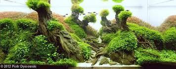 مسابقات بین المللی aga aquascaping تانك هاي 320 ليتربه بالا سال 2012