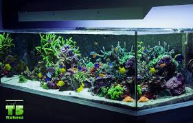 Plant Lights How To Choose by Aquaworld Aquarium Article How To Choose The Best Lighting For