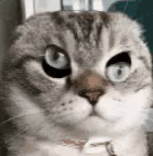 Gato Meme - gato meme gifs tenor