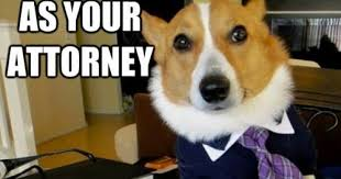 Lawyer Dog Meme - lawyer dog meme not to roll over daily vowel movements