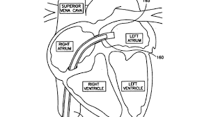colouring pages for circulatory system circulatory system coloring