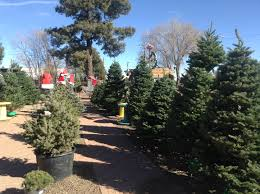 northwest arizona christmas tree farms choose and cut christmas