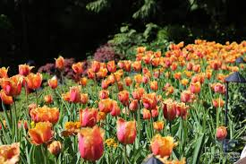 canada flowers ebcphotography colorful flowers beckon visitors of butchart