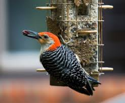feeding your backyard birds the humane society of the united states