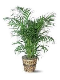 Indoor House Plants Low Light Indoor Climbing Plants U2013 How To Grow Climbing Houseplants Indoor