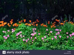 tulip bed farmleigh estate phoenix park mixed mix colour color