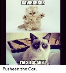 Pusheen The Cat Meme - 25 best memes about pusheen the cat pusheen the cat memes