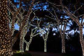 light wrapped trees garden ideas houseandgarden co uk