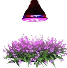light and plant growth best light bulb for plants fooru me