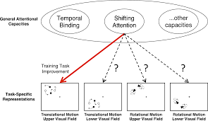 training enhances attentional expertise but not attentional