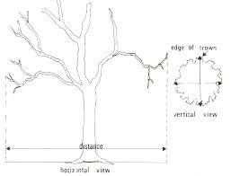 chion tree nomination guidelines nebraska forest service