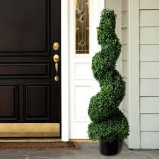 romano 4 ft boxwood spiral topiary tree 50 10002 r the home depot