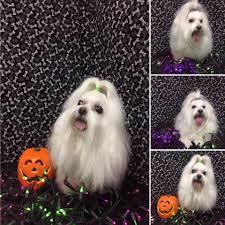 halloween city lake havasu bubbles n bows grooming salon home facebook