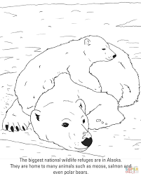 polar bears coloring page free printable coloring pages