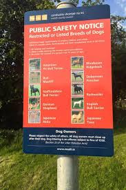 american pitbull terrier uk law these 10 dog breeds are u0027too dangerous to be family pets
