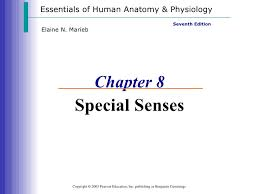 Human Anatomy And Physiology By Elaine N Marieb Special Senses