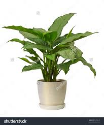 Christian Home Decor Store Indoor Plants That Purify Air In Living Spaces Even Though Most