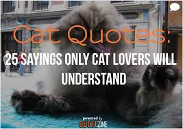 Awesome Quotes About Cats Being - cat quotes 25 sayings only cat lovers will understand